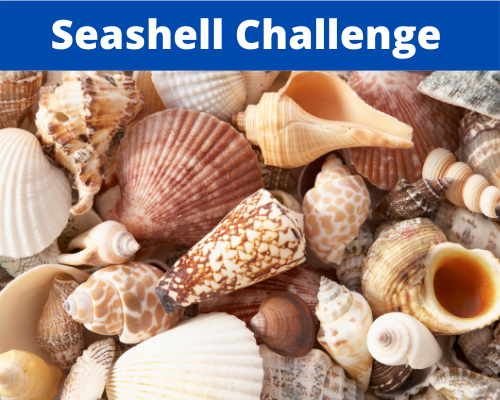 Seashell Challenges